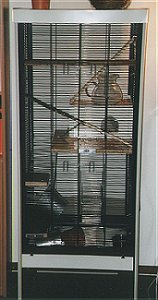 This cage is especially suitable for degus. It's big and made of metal.